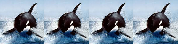 blackfish rating